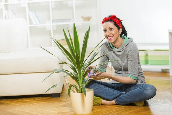 10 points that will make buying artificial plants easier